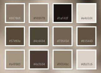 màu taupe là màu gì